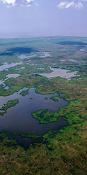 Aerial view of a marsh near Morgan City, La.    Photo: Jim Zietz